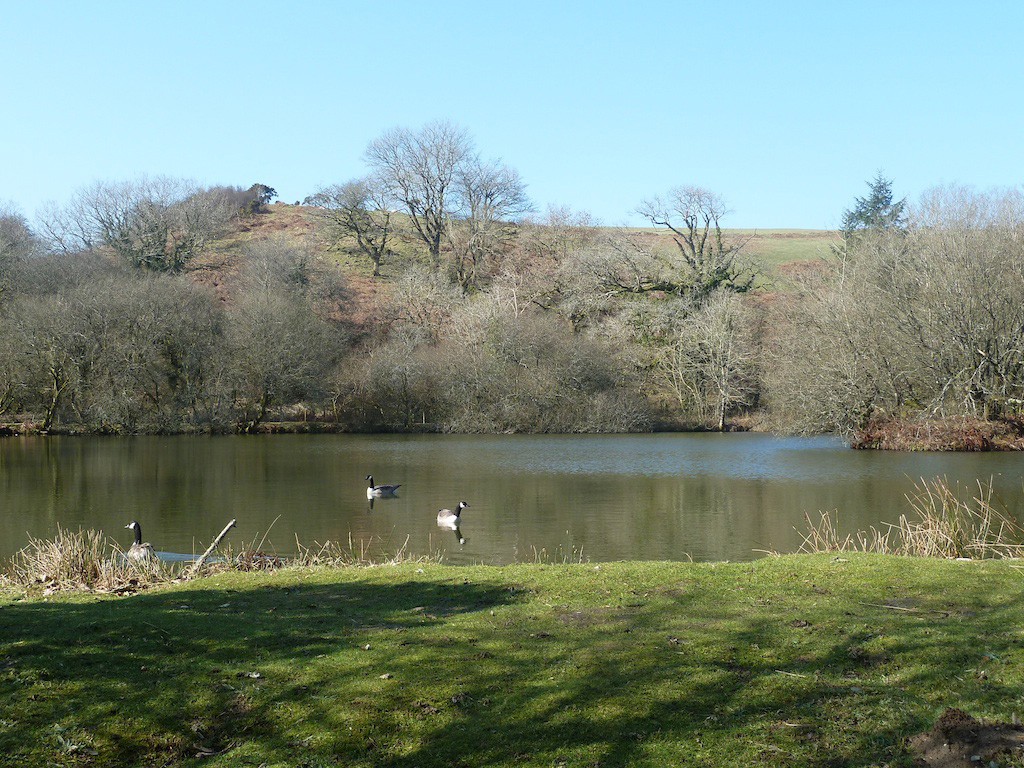 Tregulland Lake and Grounds